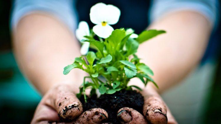 IKWRO – Launch of Refuge Garden Crown – Crowdfunding Appeal